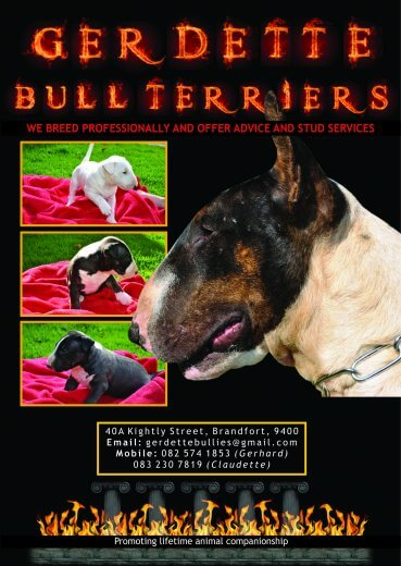 Terrier Puppies for Sale in Johannesburg by Gerdette Bull Terriers