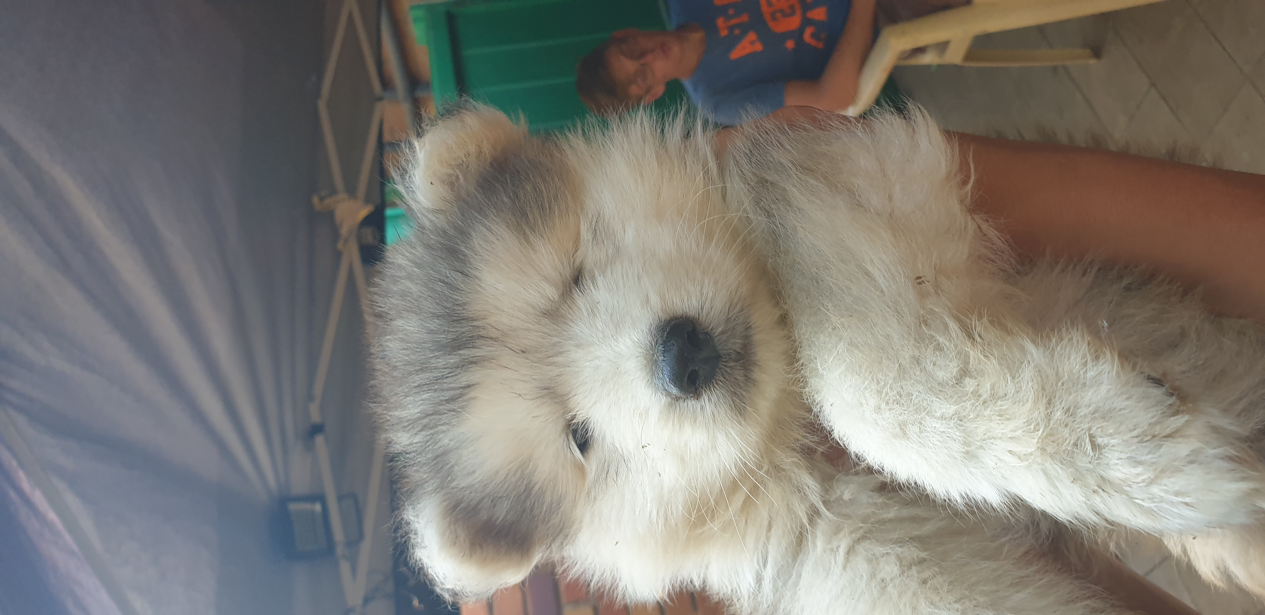 Other Puppies in Mpumalanga (17/11/2019)