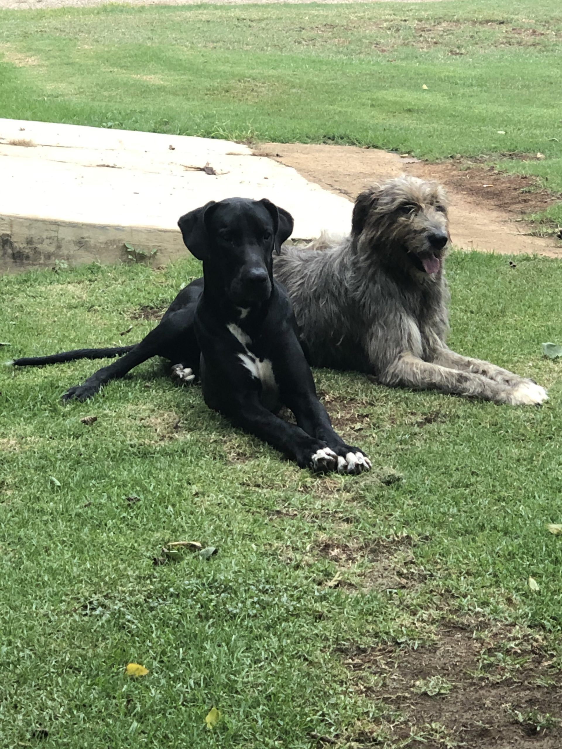 Other Puppies in Mpumalanga (27/04/2020)