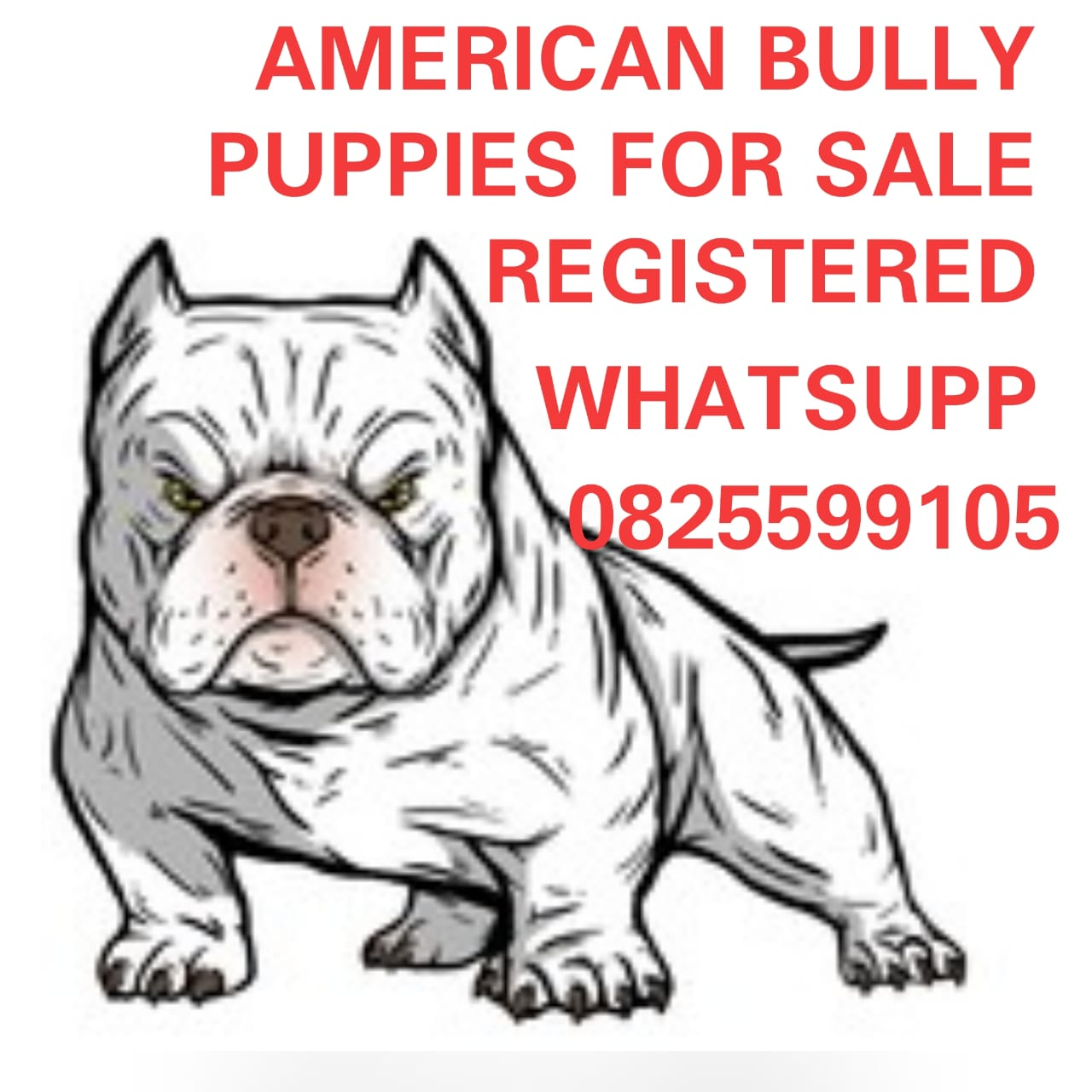Other Puppies in Mpumalanga (10/09/2021)