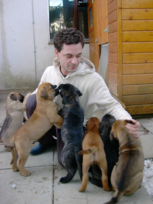 3 Males and 7 Females Bullmastiff Puppies for Sal